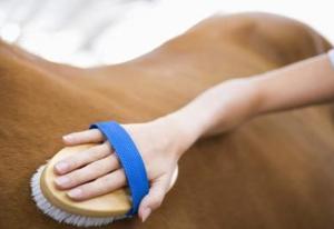 Все что нужно знать о чистке лошадей
