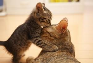 Возможные осложнения у кошек в процессе родов