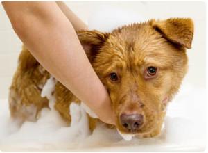 Уход за кожными покровами собаки во время болезни