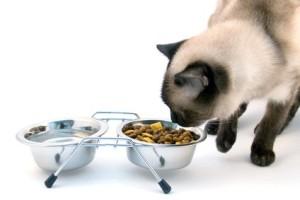 Как правильно кормить кошек и котов старше 8 лет
