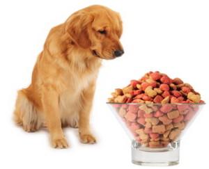 Чем правильно кормить собаку