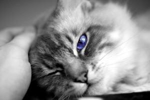 Симптомы, требующие вызова ветеринара для кошки