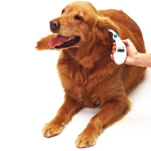 Как ухаживать за ушами собаки