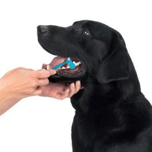Уход за полостью рта собаки