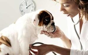 Определение частоты дыхания у собак