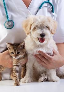 Демодекоз (подкожный клещ) у собак и кошек