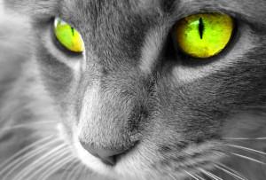 заболевания глаз у кошек
