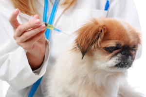 Dog Healthcare: vaccination.