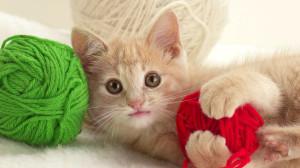 опасные предметы для кошки в доме