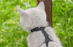 выгуливание стареющего кота