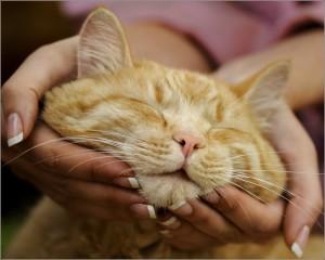 уход за стареющим котом