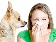 allergija-na-sobak