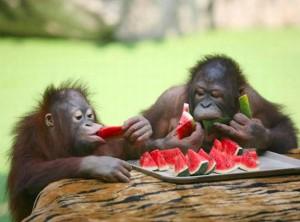 питание обезьян