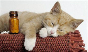 глисты у кошек
