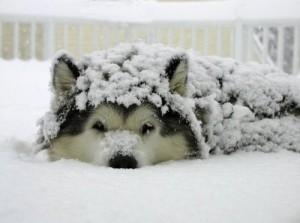 uhod-za-sobakoj-zimoj