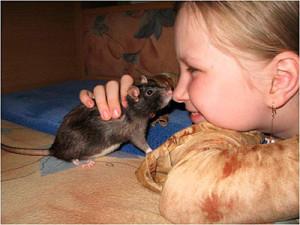 deti-i-domashnie-krysy