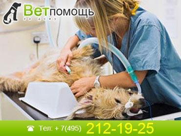 Ветеринар-хирург в Москве