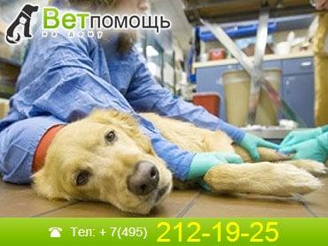 Ветеринар-онколог в Москве