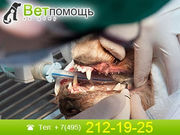 Ветеринар-стоматолог в Москве