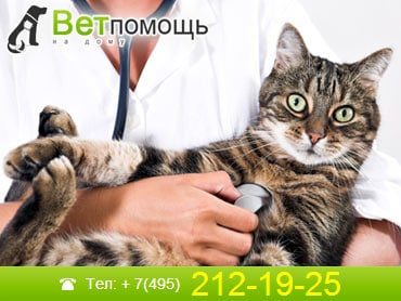 Ветеринар-терапевт в Москве