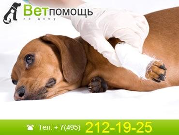 Ветеринар-травматолог в Москве