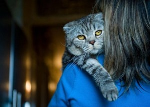 Страх разлуки у кошек
