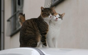 Откуда берутся котята