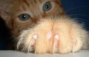 Проблемы поведения кошек