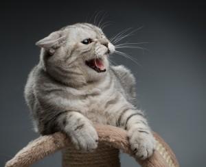 Активная агрессия кошки