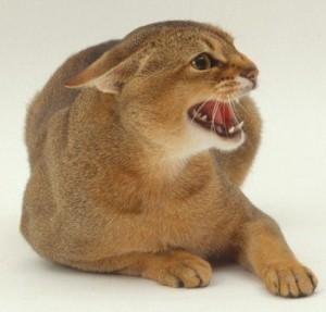 Врожденная агрессия кошек не поддается коррекции