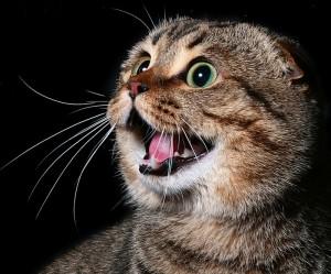 Зная всё о причинах агрессивного поведения кошек, на что необходимо обращать внимание?