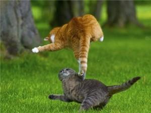 Событие, вызвавшее страх у кошки
