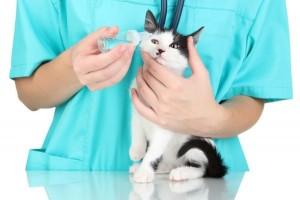Как лечить слезотечение у кошек