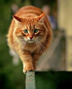 Аппарат движения кошек
