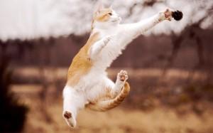 Мышечные клетки кошки