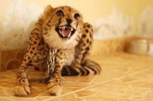 Домашние экзотические животные