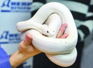 Хотите завести змею в доме