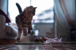 Сознательный контроль и рефлексы у кошки