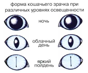 Форма кошачьего зрачка при различных уровнях освещенности