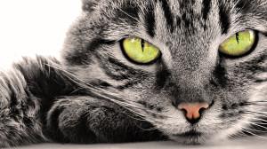 Органы осязания у кошек
