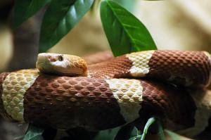 Нарушение линьки у змей