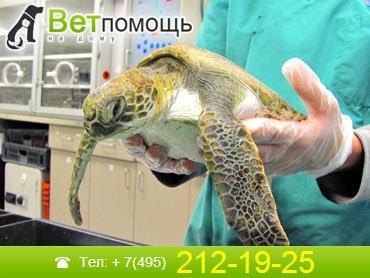 Ветеринар-герпетолог в Москве