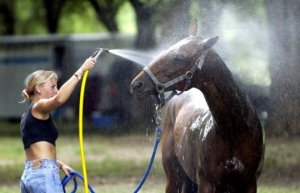 Все что нужно знать о мытье лошадей