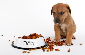 Собака не ест, что делать