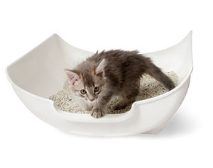 Почему у кота / кошки / котенка кровь в моче