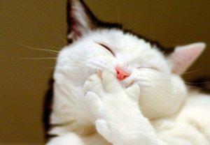Причины возникновения кашля у кошек