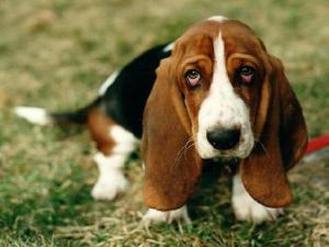 Что делать, если собака вялая