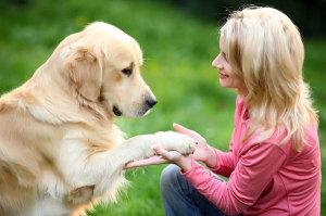 Почему собака икает