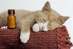 Как вылечить запор у кошки, кота или котенка