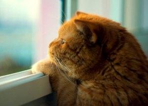 Кот, кошка или котенок выпал из окна